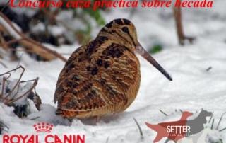 SETTERCLUB Concurso Caza Practica Becada Soria 2015