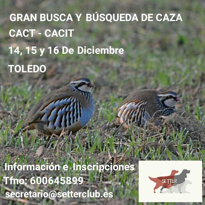 PRUEBAS INVERNALES DE GRAN BUSCA Y BÚSQUEDA DE CAZA – TOLEDO 2017
