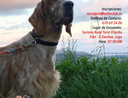 Concurso de Caza Práctica – Galicia 2020